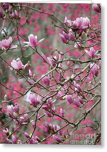 Spring Pink And Gray Branches Greeting Card by Carol Groenen