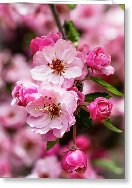 Spring Pink Greeting Card by Teri Virbickis