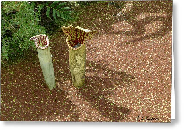 Spring Pitcher Plants Greeting Card