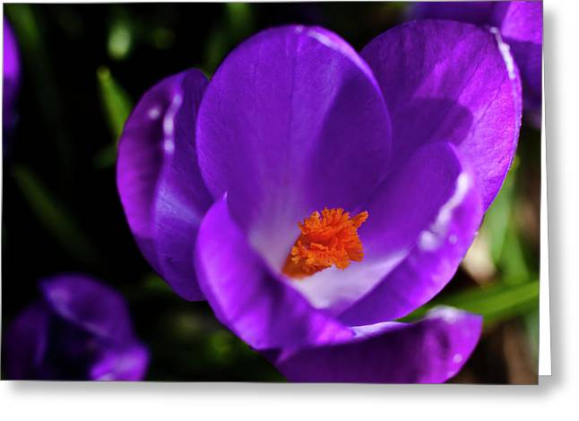 Spring Pollen Greeting Card by ShaddowCat Arts - Sherry
