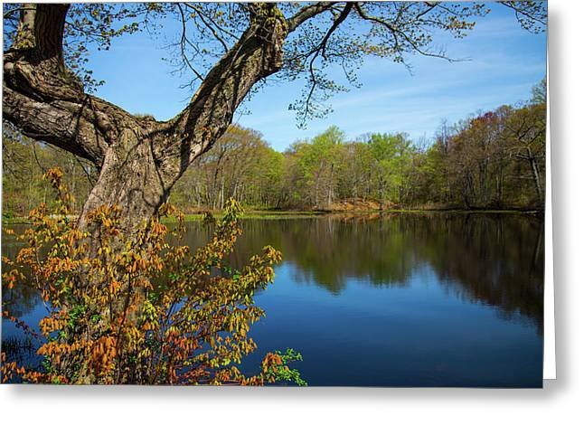 Spring Pond Greeting Card by Karol Livote