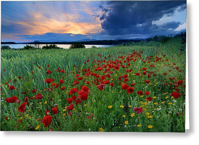 Spring Poppies Sunset At The Lake Greeting Card by Guido Montanes Castillo