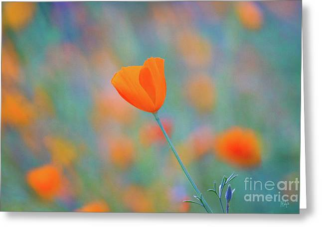 Spring Poppy Greeting Card