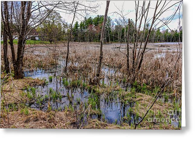 Spring Reflections Greeting Card by Claudia M Photography