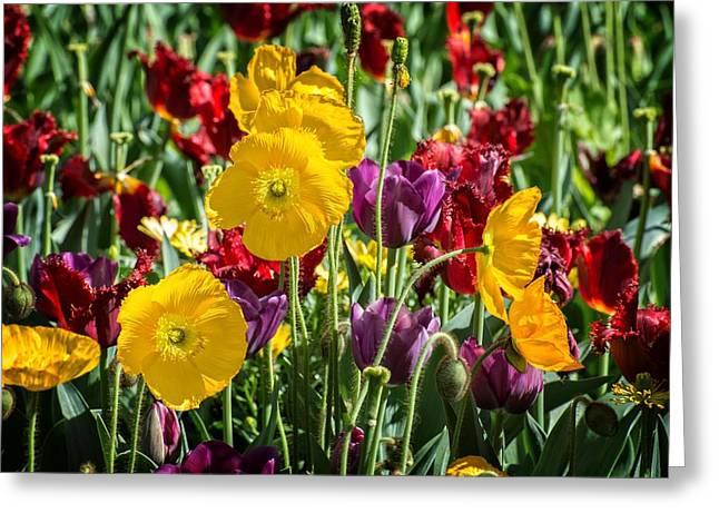 Spring Riot Greeting Card by Lynn Bauer