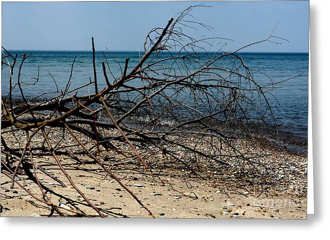 Spring Season And A Hot Day At The Beach Greeting Card by Reva Steenbergen