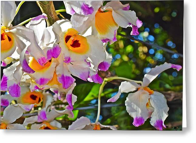 Spring Show 15 Brazilian Orchid Greeting Card
