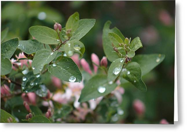 Greeting Card featuring the photograph Spring Showers 5 by Antonio Romero