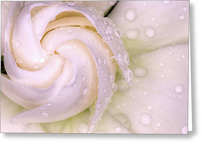 Spring Showers On The Gardenia Greeting Card by JC Findley