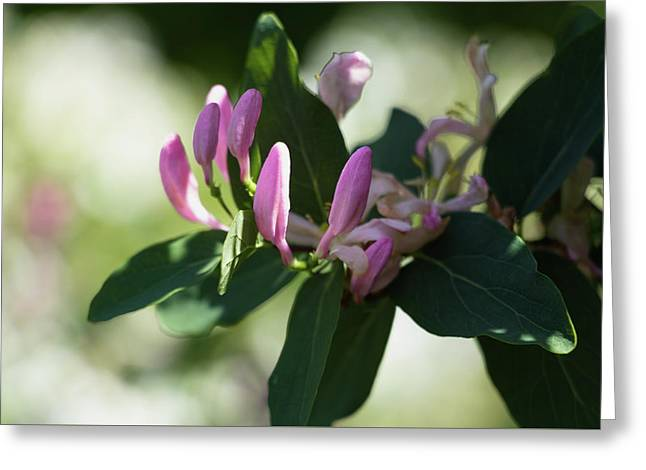 Greeting Card featuring the photograph Spring Shrub With Pink Flowers by Cristina Stefan