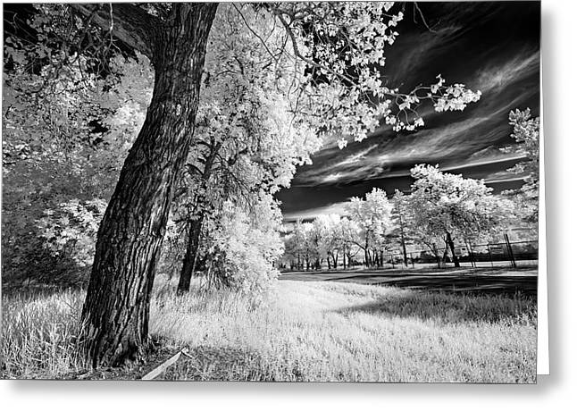 Greeting Card featuring the photograph Spring Sky by Dan Jurak