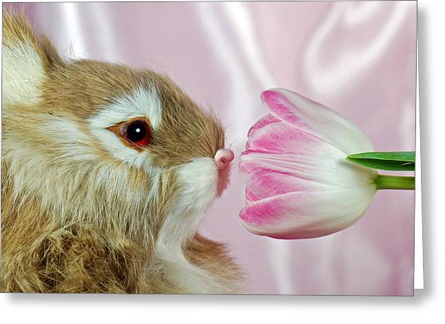 Spring Sniffer Greeting Card by Maria Dryfhout