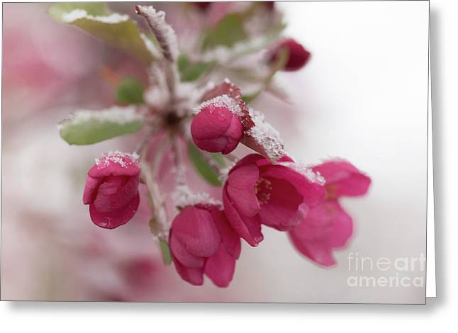 Greeting Card featuring the photograph Spring Snow by Ana V Ramirez