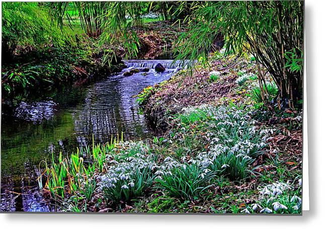 Spring Snowdrops By Stream Greeting Card