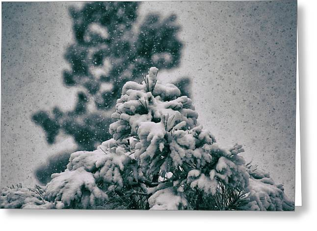 Greeting Card featuring the photograph Spring Snowstorm On The Treetops by Jason Coward