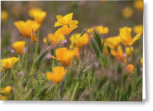 Greeting Card featuring the photograph Spring Softly Calling  by Saija Lehtonen