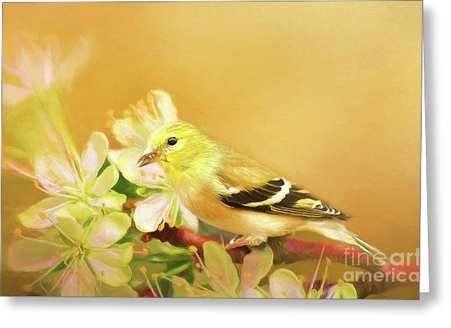 Greeting Card featuring the photograph Spring Song Bird by Darren Fisher