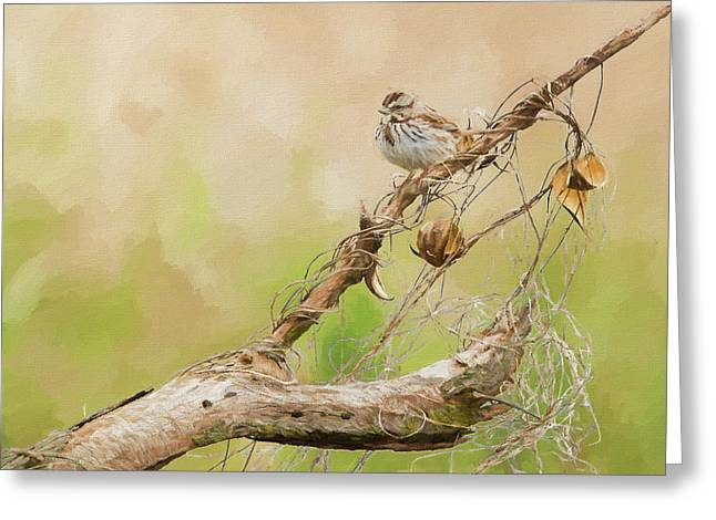 Spring Song Sparrow Greeting Card by Allen Kurth