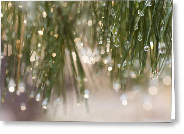 Spring Sparkle Greeting Card by Sue OConnor