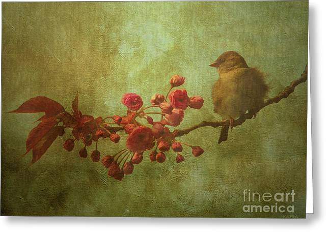 Spring Sparrow Greeting Card