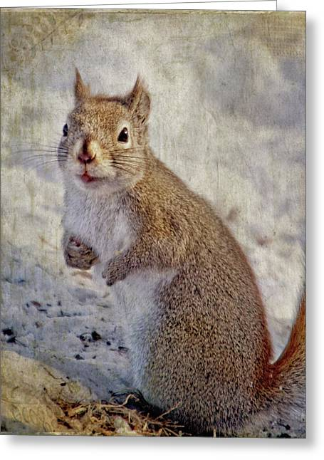 Spring Squirrel Greeting Card