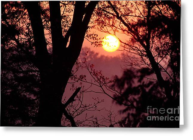 Spring Sunrise Through Trees Greeting Card by Thomas R Fletcher