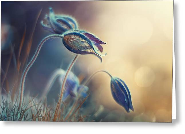 Spring Sunset Greeting Card by Magda Bognar