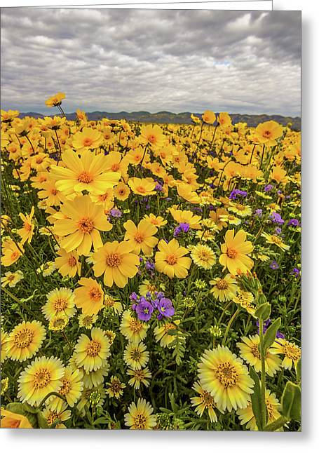 Greeting Card featuring the photograph Spring Super Bloom by Peter Tellone