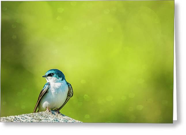 Spring Swallow Greeting Card