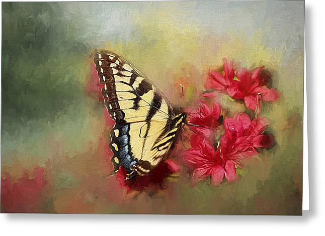 Spring Swallowtail Greeting Card by Darren Fisher