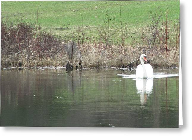 Spring Swan Greeting Card by Wendy Shoults
