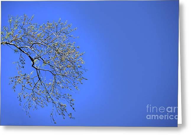 Spring Takes Flight Greeting Card by Skip Willits