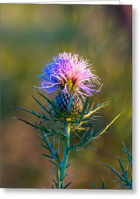 Spring Thistle Greeting Card