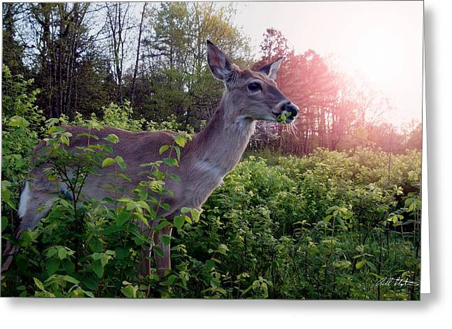 Spring Time Greeting Card by Bill Stephens