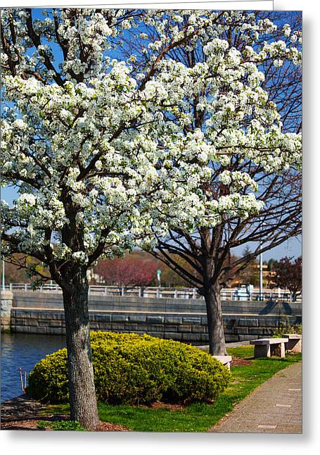 Spring Time In Westport Greeting Card