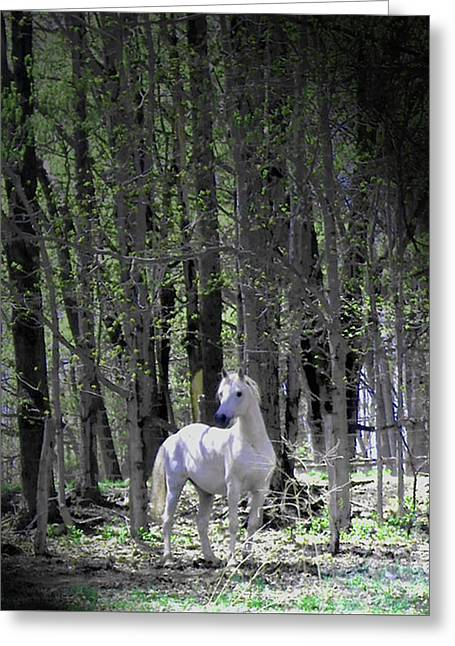 Spring Time With The Stallion Greeting Card by Patricia Keller