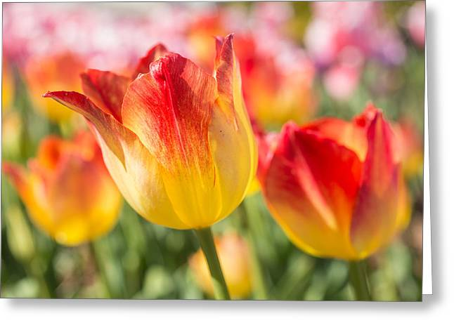 Spring Touches My Soul Greeting Card