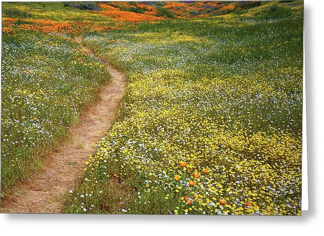 Greeting Card featuring the photograph Spring Trail Through A Sea Of Wildflowers At Diamond Lake In California by Jetson Nguyen