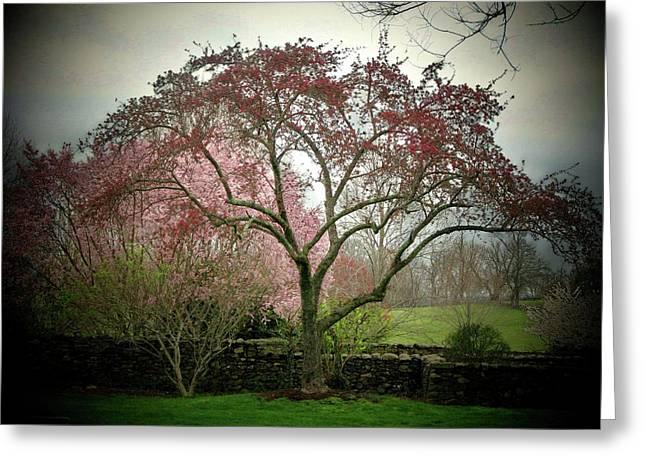Spring Trees Greeting Card by Joyce Kimble Smith