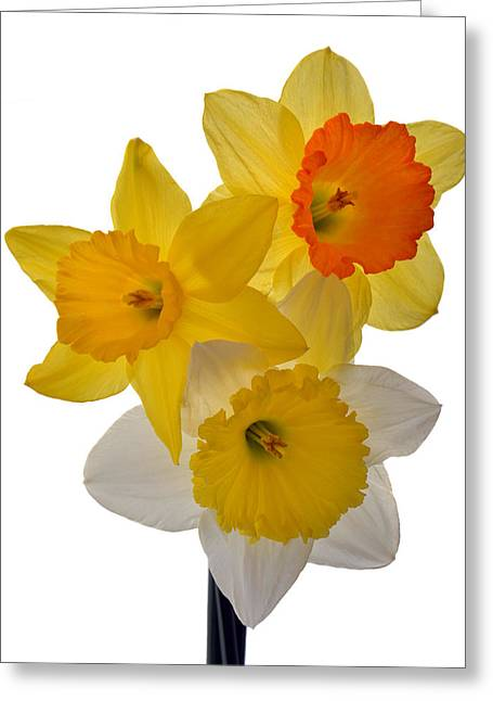 Spring Trio Greeting Card