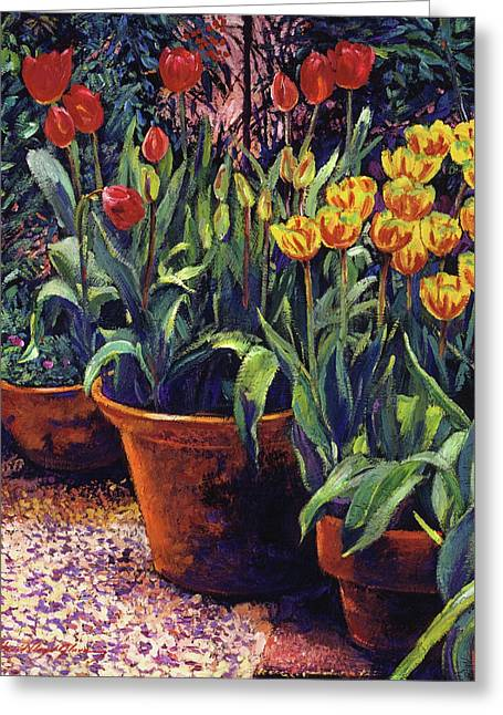 Spring Tulip Pots Greeting Card by David Lloyd Glover