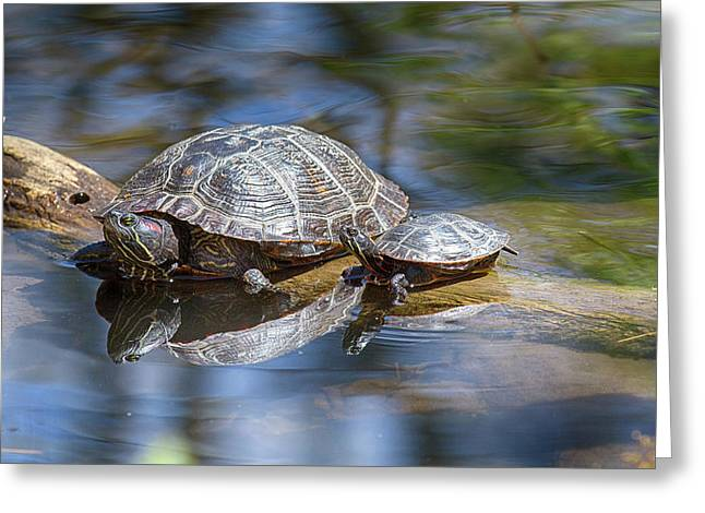 Spring Turtle Baby Greeting Card