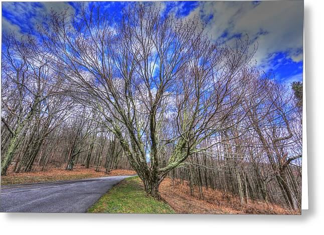 Spring Version Of The Autumn Drive Greeting Card by Shannon Louder