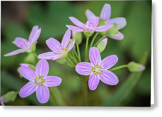 Greeting Card featuring the photograph Spring Vibe by Bill Pevlor