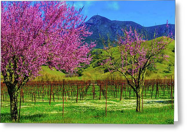 Spring Vineyards And Mt St Helena Greeting Card