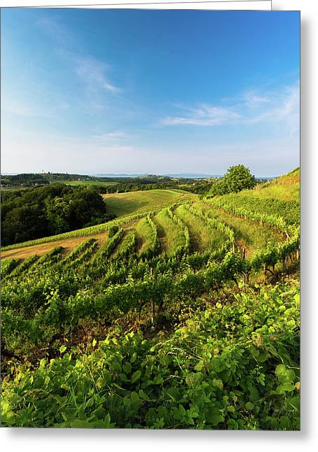 Spring Vinyard Greeting Card