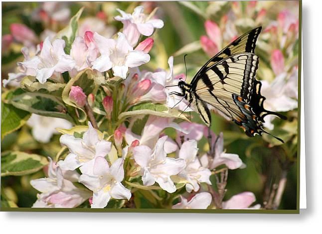 Spring Visit Greeting Card