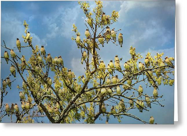 Spring Waxwing Flock Greeting Card