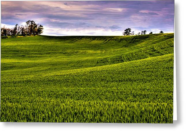 Spring Wheat Field Greeting Card by David Patterson