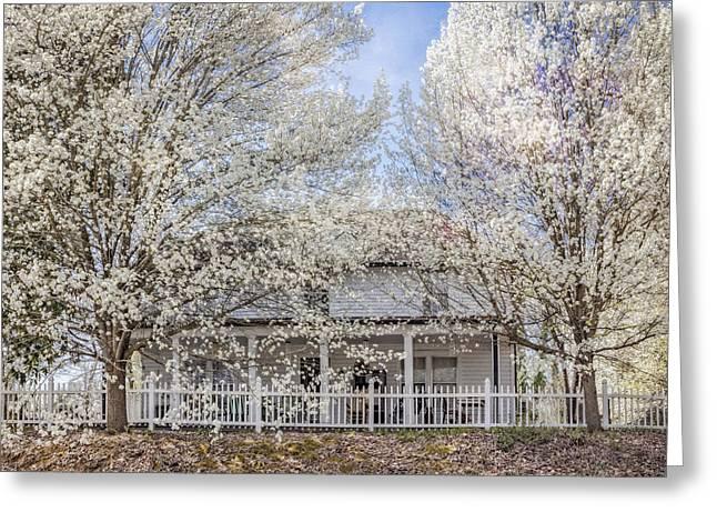 Spring Whites Greeting Card by Debra and Dave Vanderlaan